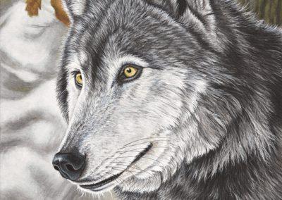 53 - Ourok Loup Gris