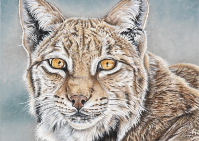 42 - Boreale femelle lynx