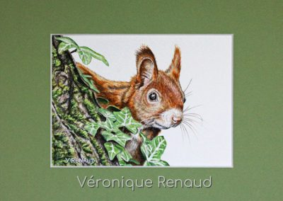 57 - Ecureuil