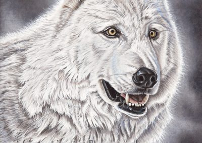 48 - Hottah loup blanc