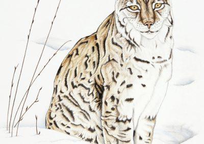 27 - Femelle lynx assise dans la neige