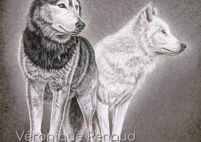 Loup gris et louve blanche