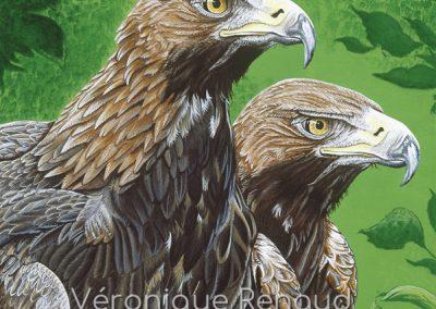 34 - Aigle Royal - observation
