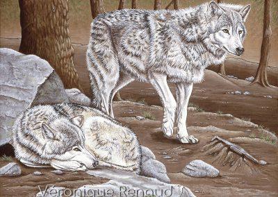 29 - Couple alpha en sous bois