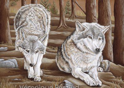31 - Couple alpha en sous bois 2