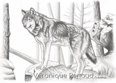 Le promontoire du loup