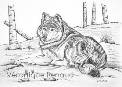 Jeune louve de Pologne