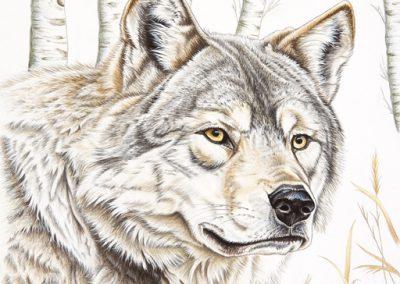 63 - Loup de Mongolie