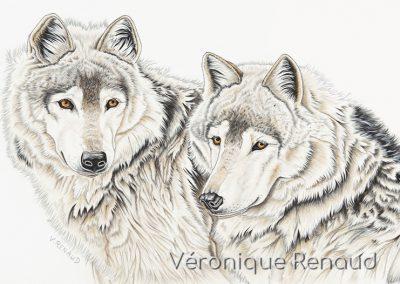 25 - Couple de loups