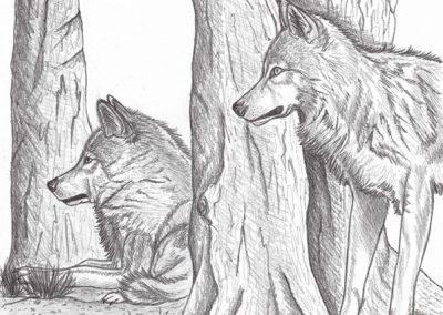 07 - Observation dans le sous bois